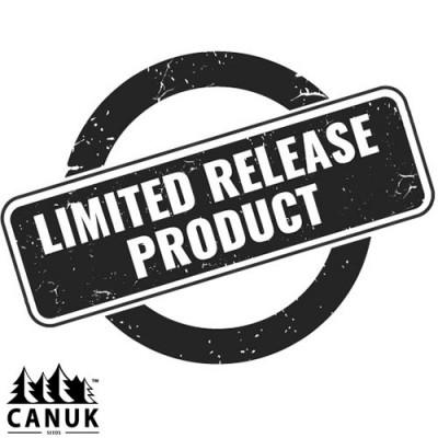 Gamma Cookies Regular Seeds *Limited Release*