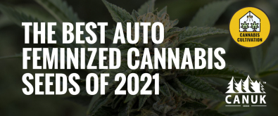 The Best Auto Feminized Seeds of 2021