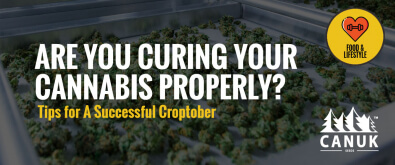 Are You Curing Your Cannabis Properly? Tips for A Successful Croptober