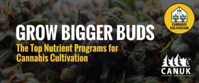 Grow Bigger Buds: The Top Nutrient Programs for Cannabis Cultivation