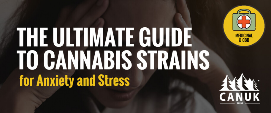 The Ultimate Guide to Cannabis Strains for Anxiety and Stress
