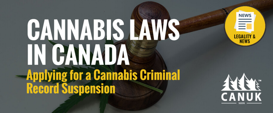 Cannabis Laws in Canada: Applying for a Cannabis Criminal Record Suspension