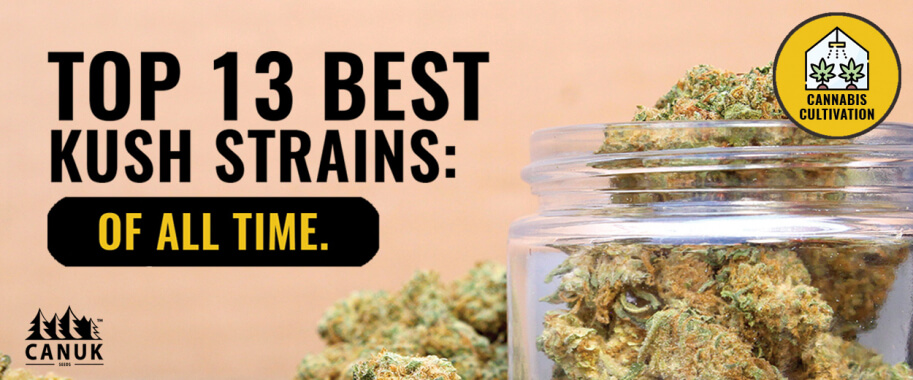 Top 13 Best Kush Strains of All Time