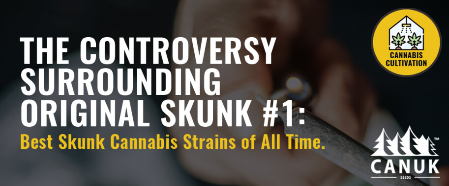 The Controversy Surrounding Original Skunk #1: Best Skunk Cannabis Strains of All Time