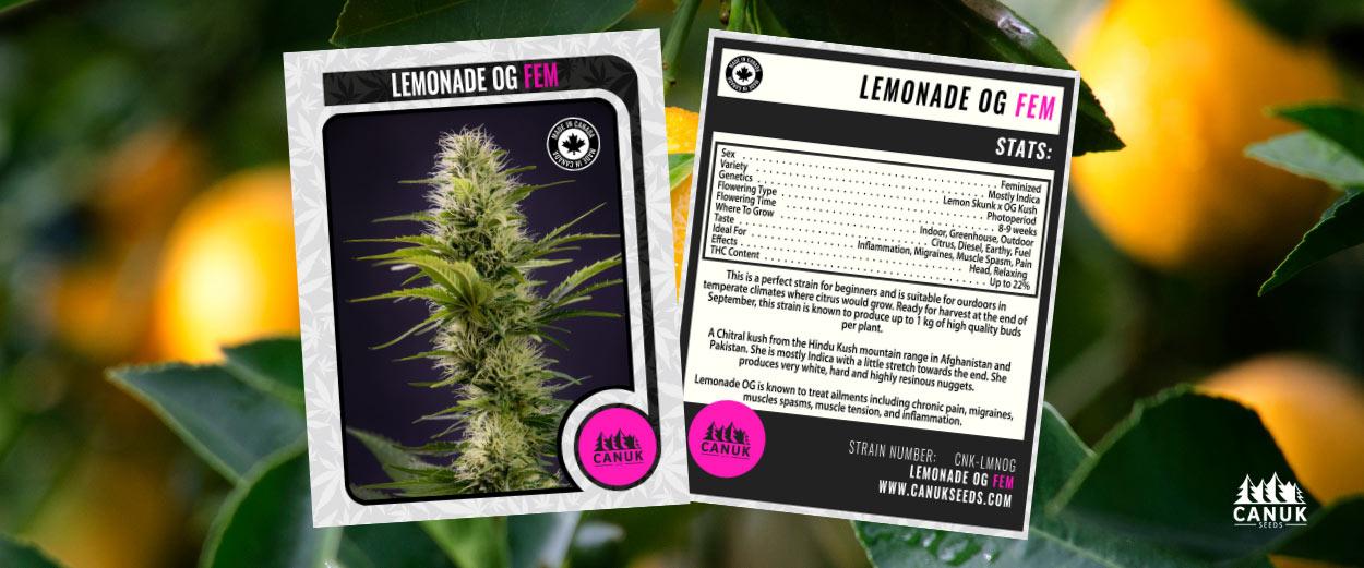 Lemonade OG