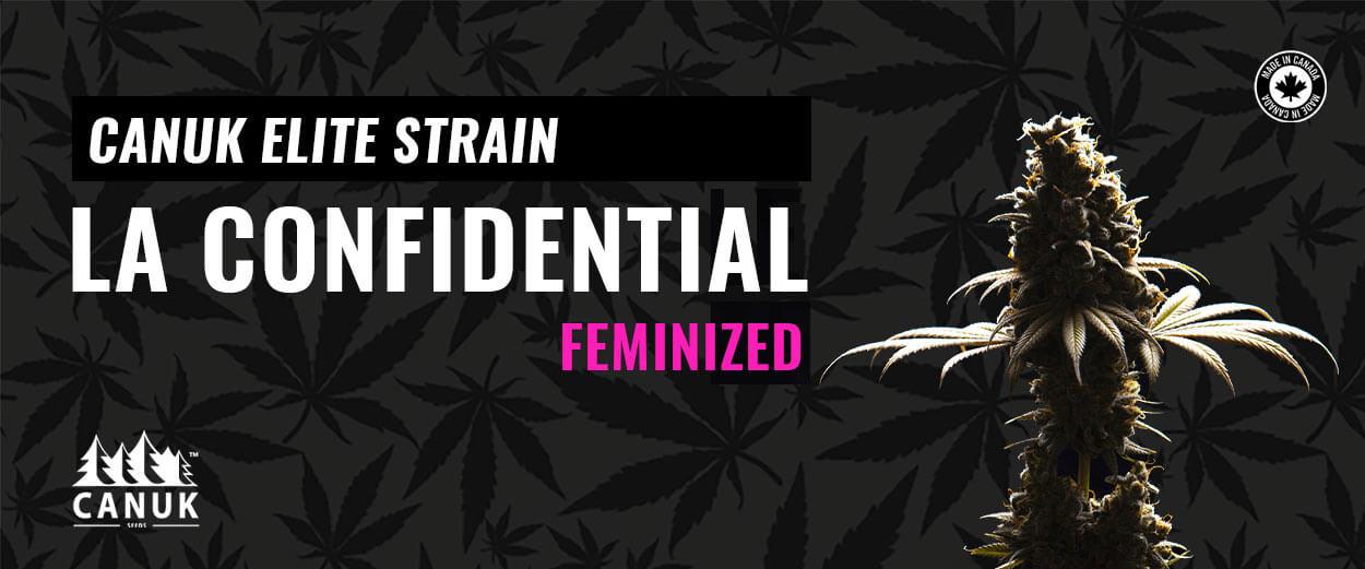 LA Confidential Elite Canuk Strain